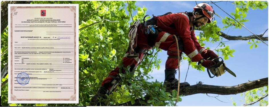 Требуется ли порубочный билет при кронирование деревьев