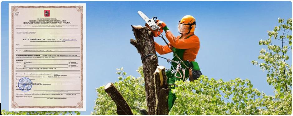Порубочный билет необходим для удаления деревьев
