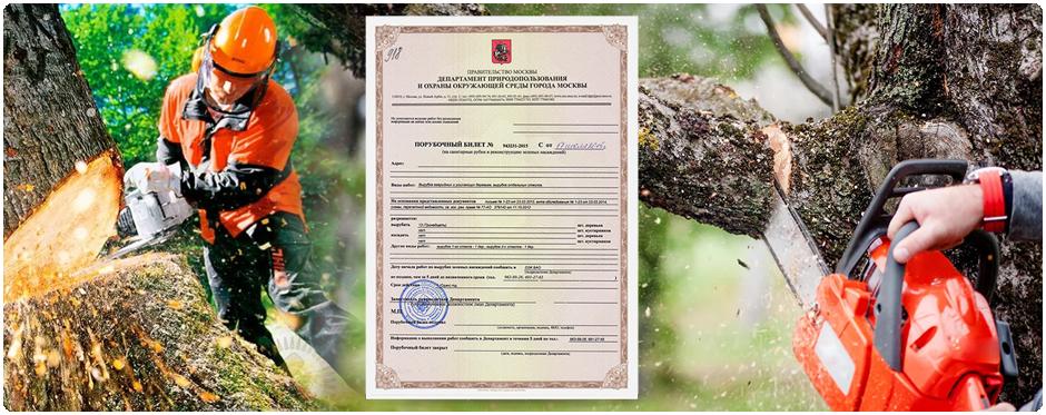 Порубочный билет необходим для поведения по кронированию и удалению деревьев