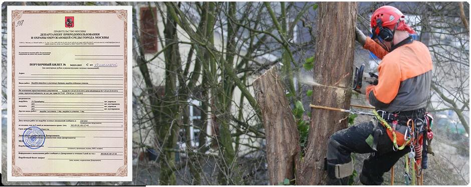Перед началом спиливания деревьев необходимо получить порубочный билет