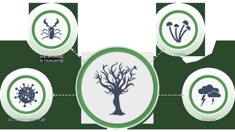 Негативное влияние на дерево оказывают различные факторы