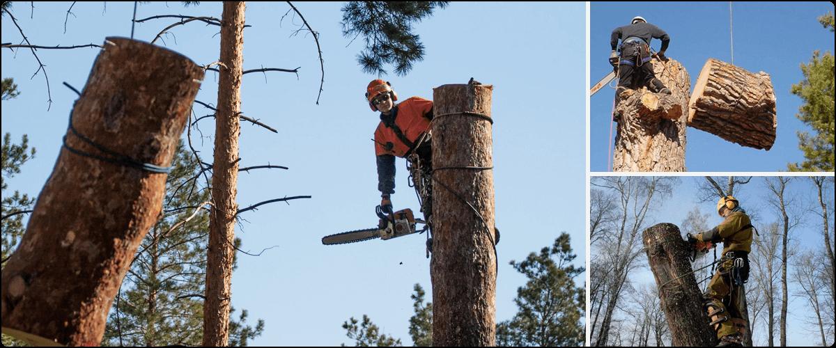 Вырубка деревьев частями