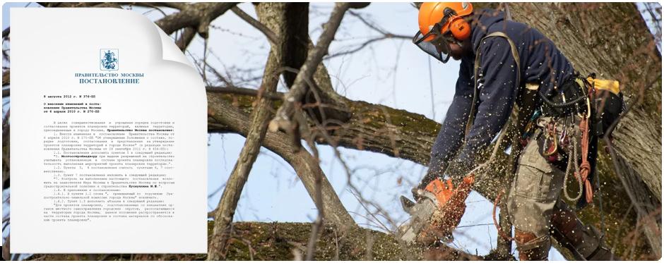 После удаления сухостойного дерева мы представляем документы для закрытия порубочного билета