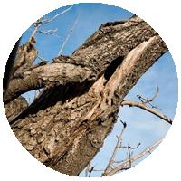 Сухостойные деревья