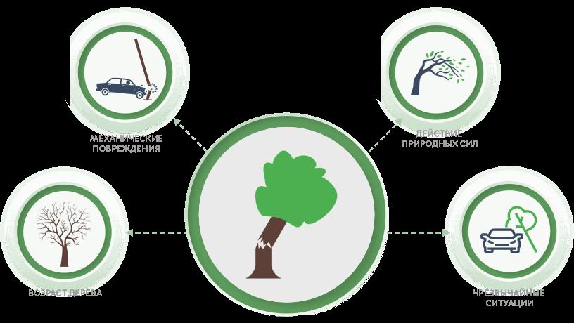 Причины возникновения аварийных деревьев