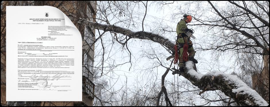 Для удаления аварийного дерева выдается специальное разрешение