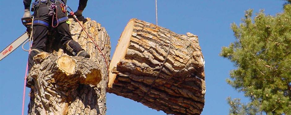 вырубка дерева с завешиванием