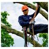 альпинист на дереве