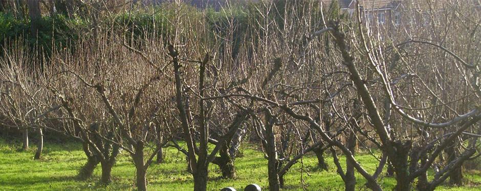 деревья после обрезки