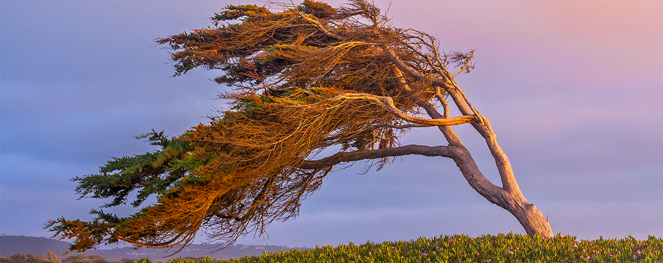дерево с наклоном