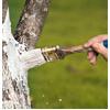 дезинфекция дерева