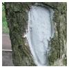 лечение дупла на дереве