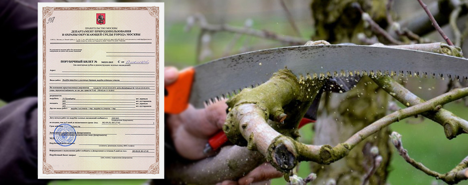 обрезка дерева и порубочный билет