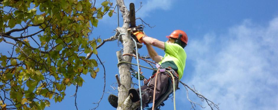 обрезка верхушки дерева