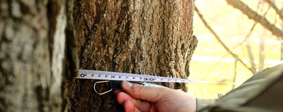 Обследование дерева