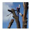 подвешивание дерева