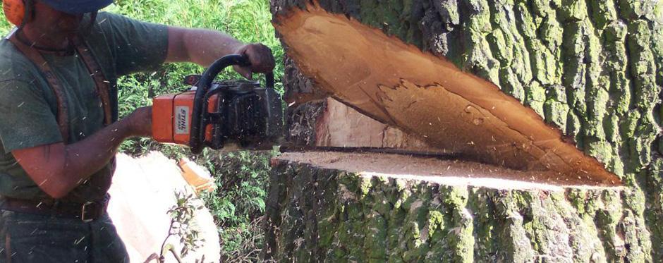 Спиливаем деревья любого размера и сложности
