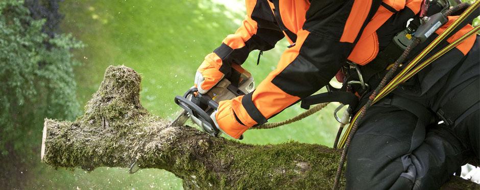 спиливание дерева
