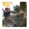 спил дерева промышленным альпинистом