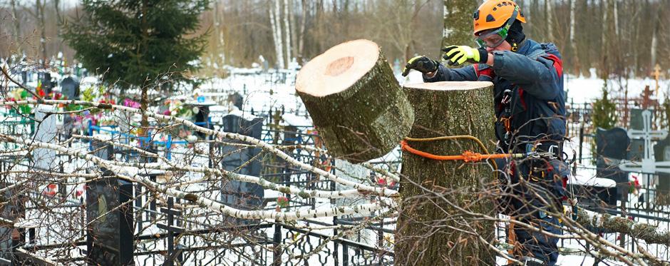 спил деревьев на кладбище