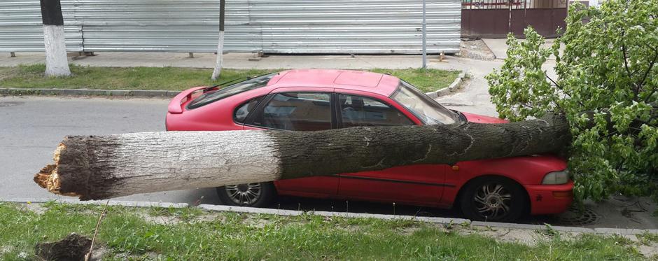спиленное дерево упало на автомобиль