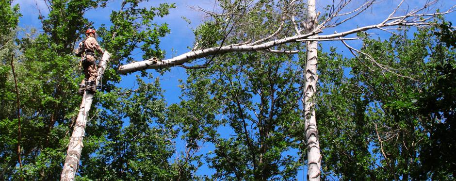 топпинг деревьев