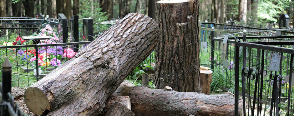 удаление деревьев на кладбище