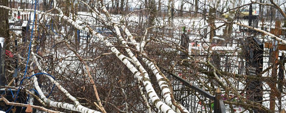 упавшее дерево на кладбище