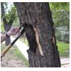 выравнивание дерева