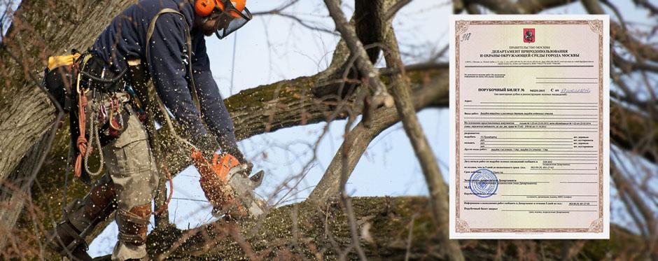 валка дерева с порубочным билетом
