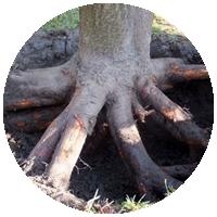 Удаление корней деревьев