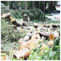 Расчистка от деревьев и кустарников