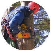 Валка сложных деревьев