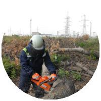 Расчистка ЛЭП от деревьев