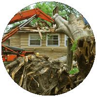 Вырубка деревьев на участке
