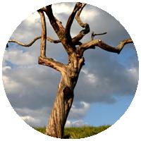 Вырубка сухих и сухостойных деревьев