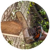 Валка дерева в сторону естественного наклона