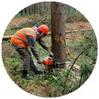 Расчистка лесного участка