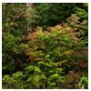 дикорастущая растительность