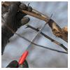 поддерживающая обрезка груши