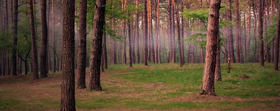 участок леса