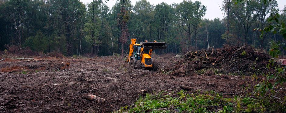 вырубленный участок леса