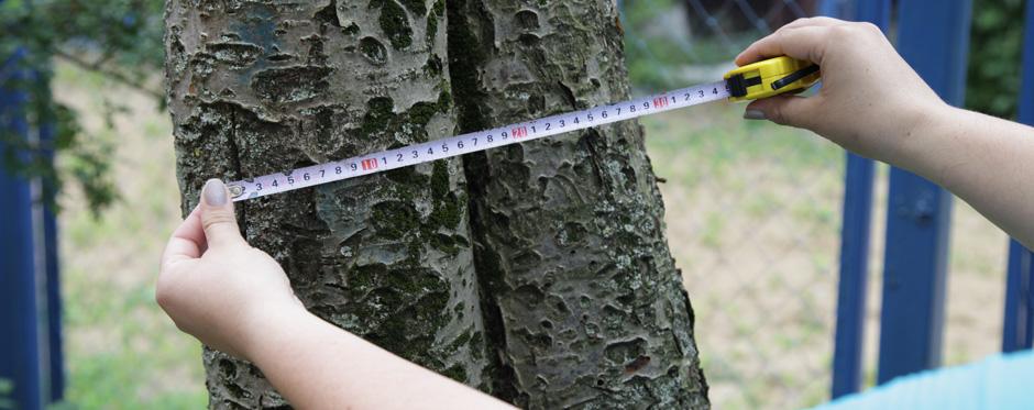 замер дерева