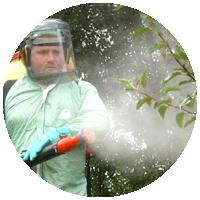 Профилактика болезней у деревьев