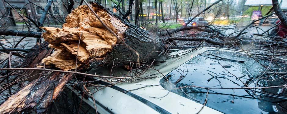 упало аварийное дерево