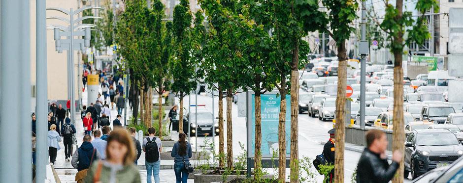 деревья в Москве