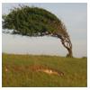 наклонённое дерево