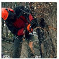 спиливание дерева целиком