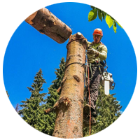 спиливание дерева частями