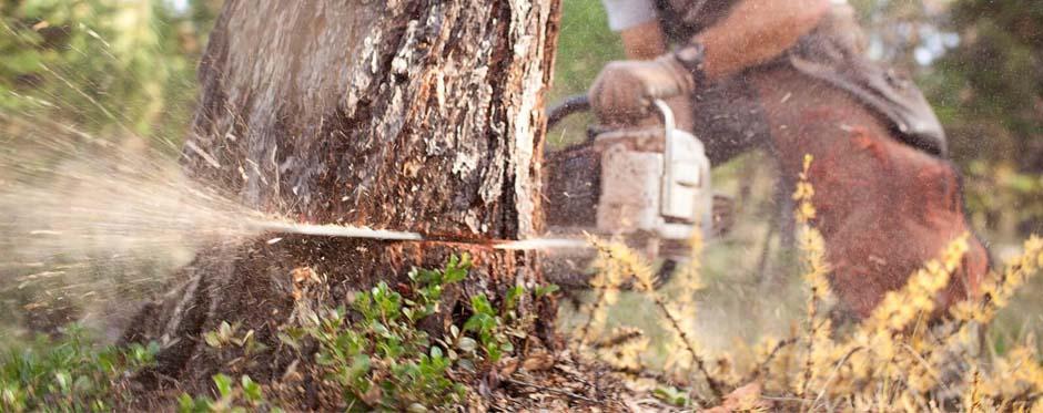 спиливание аварийных деревьев